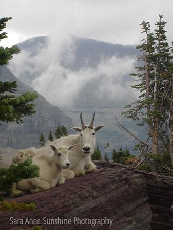 The Grandeur of Glacier National Park