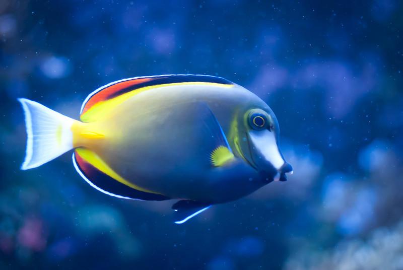 Seattle 201208 Aquarium (37).jpg
