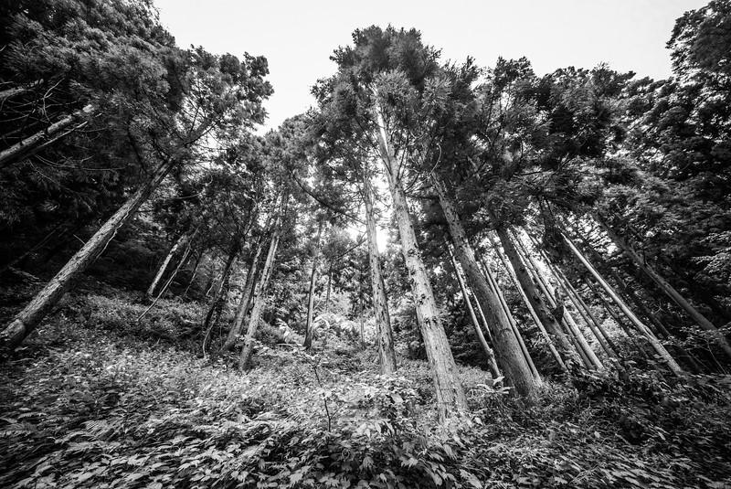 Japan tokyo osaka kyushu fukuoka kanazawa nagasaki hokkaido0014.jpg