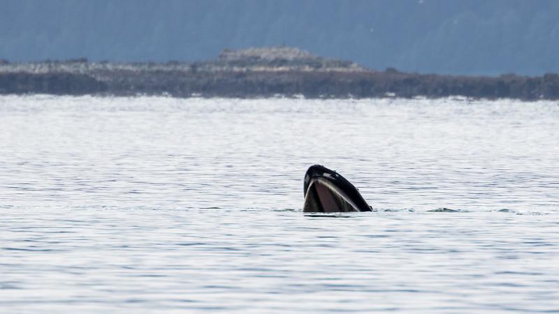 Whale's Head