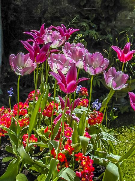 Garden's Glory 6 x 4.5 300 dpi for FF 0800.jpg
