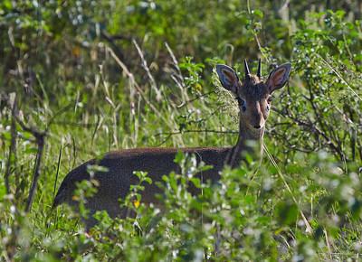 Samburu Reserve, Kenya