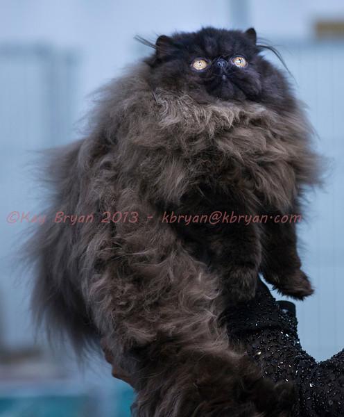 CatShow2014072_1.jpg