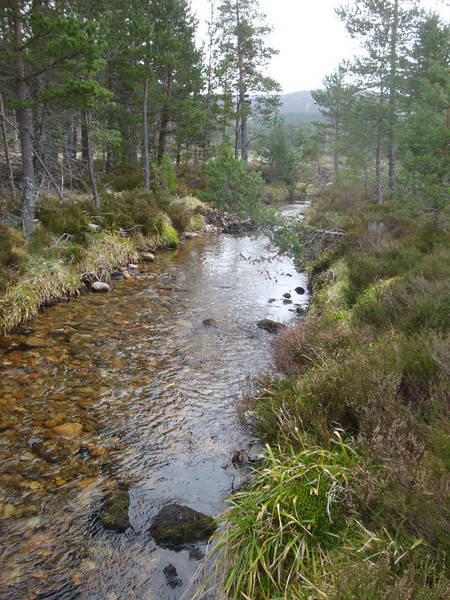 For us, however, it was a walk by quiet forest streams.