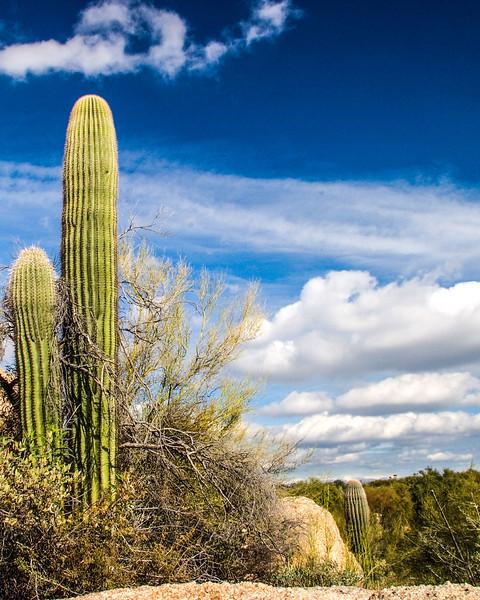 Scottsdale2004Dec10.jpg