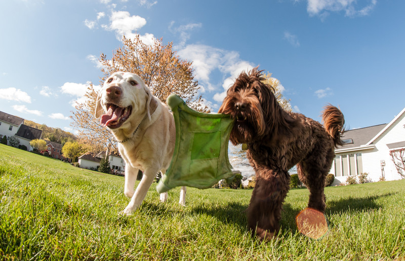 dogs and fisheye-05086.jpg
