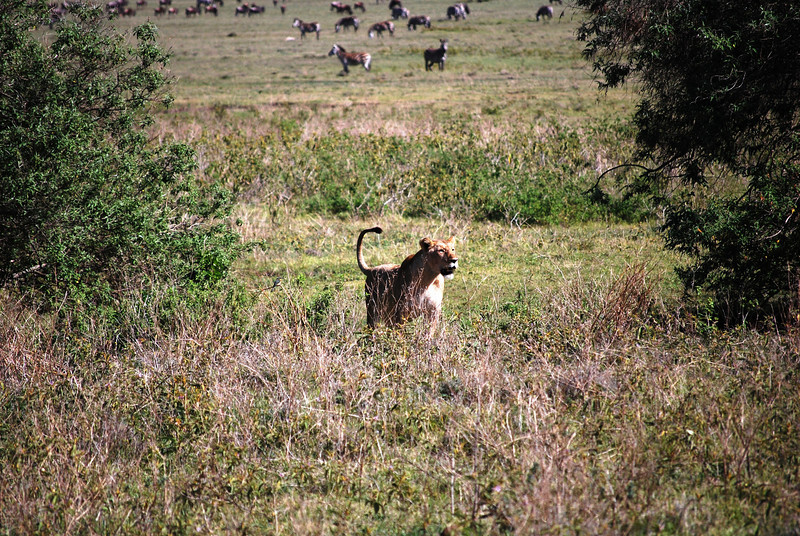 Ngorongoro (89).JPG