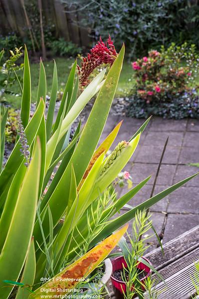 201610-16_garden_of_gill_0005-0006-Edit.jpg