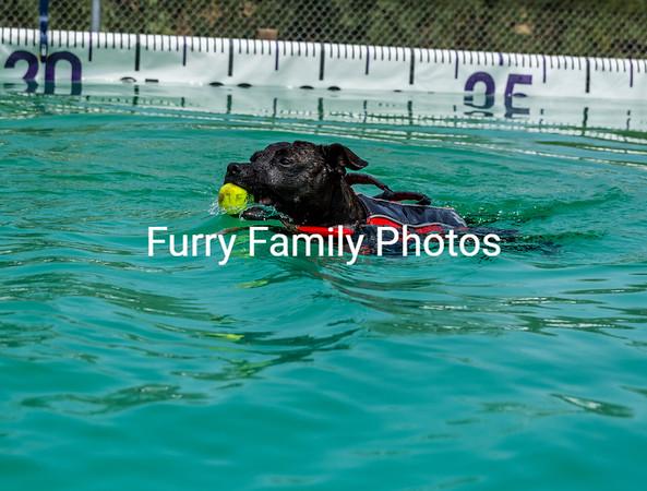 Splash 6