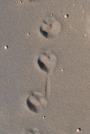 20080417_0050DSC_0007_footprints_in_the_sand_one.jpg