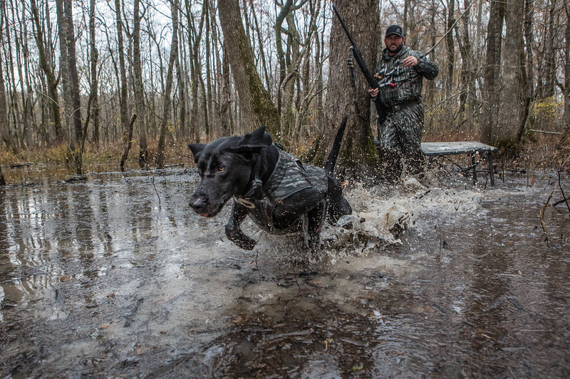 Brad Arington and Mo hunting the Arkansas flooded timber.