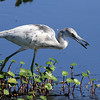 2012 Florida Wildlife (birds) :
