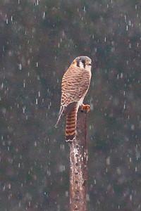 Birdathon 2011 Birds