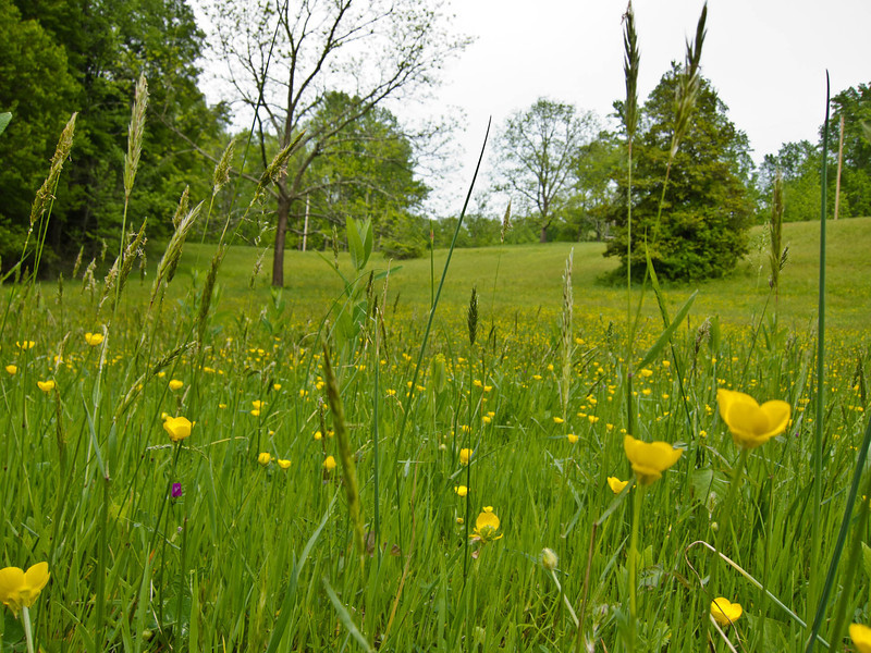 A spring meadow, reversing the cycle.