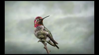 Ornithology | Ornithologie