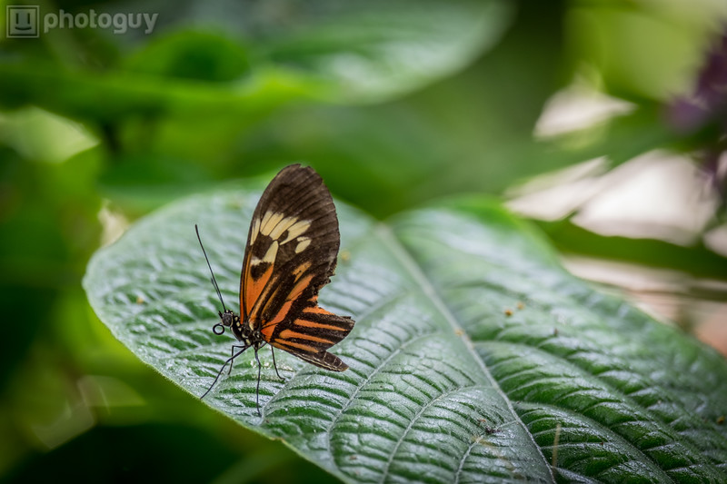 20140628_BUTTERFLY_WORLD (24 of 28)