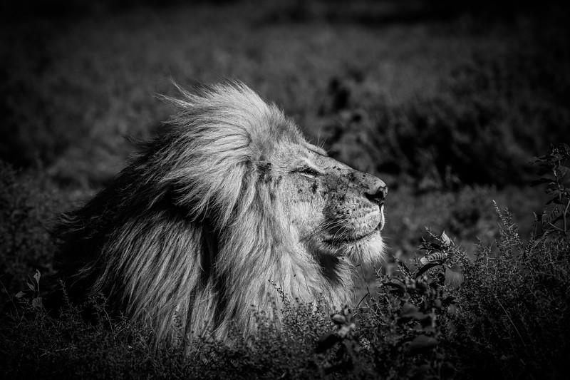 Tanzania_Feb_2018-496.jpg