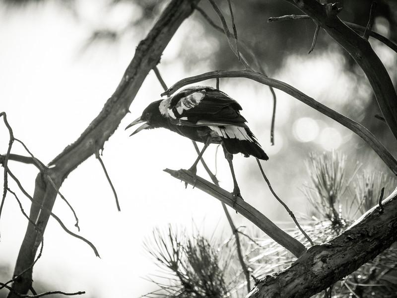 030319 birds _3.JPG