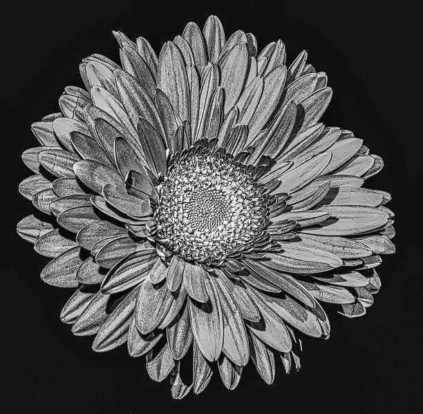 flowers (1 of 2).jpg