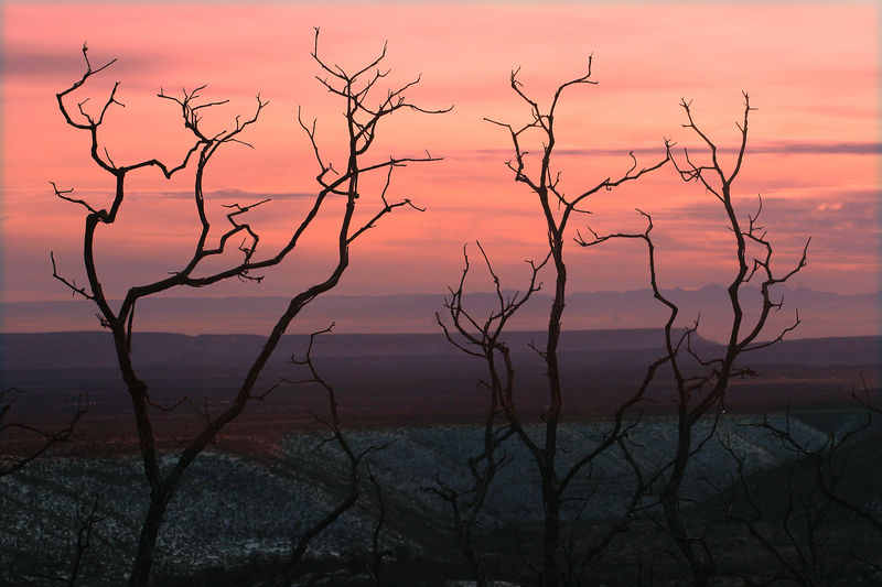 A color picture of the sunset on the mesa.  The trees in the foreground were burnt in a fire.  This is one of my favourite pictures.