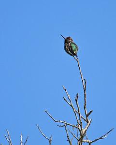 """""""Woodpecker/Bluebird Tree"""""""