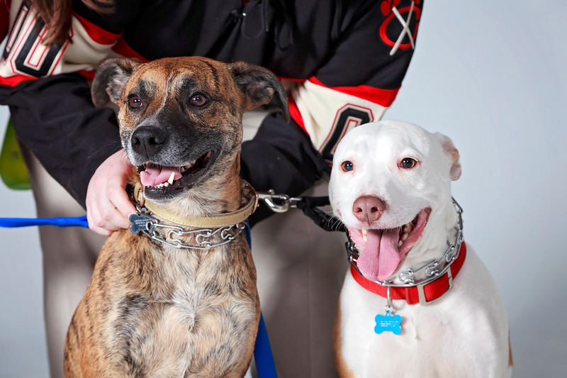 Picture Pawfect - 19 marca 2017 - 406-1.jpg