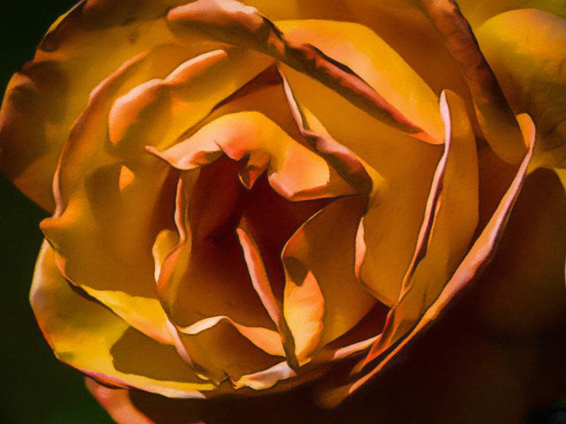 September 9 - Rose with attitude.jpg