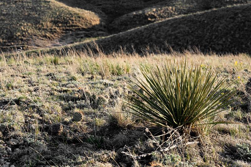 Yucca Hills