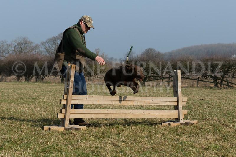 Dog Training Novice GD Feb2019-6012.jpg
