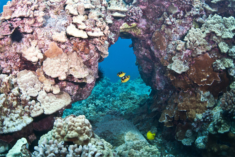 Coral Arch with Butterflies.jpg