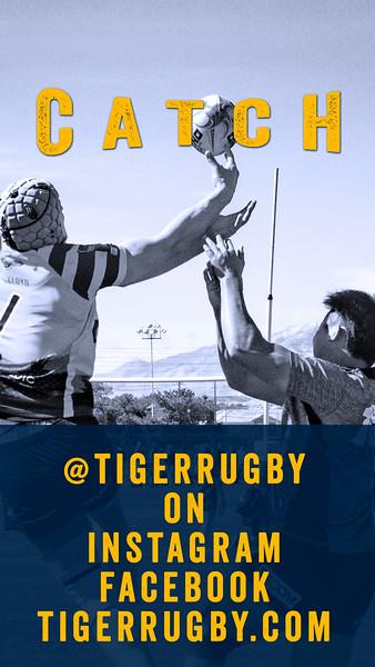 Catch Tiger07.jpg