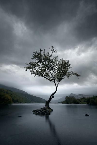Snowdonia Lone tree.jpg