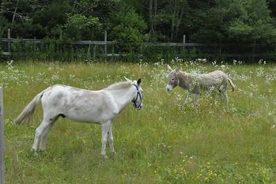 Donkeys 2015