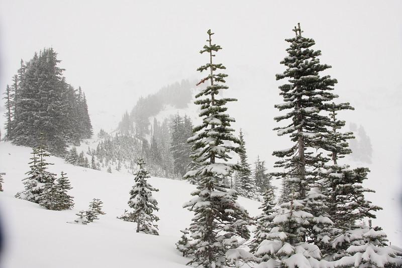 Snow in Paradise 16.JPG