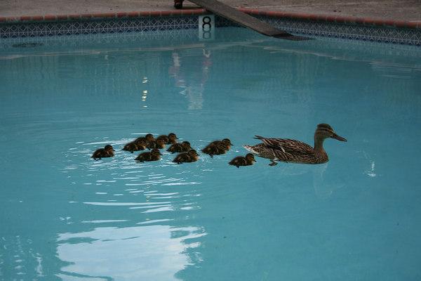 Duckie Visit