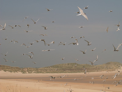Beadnell Haven 2006