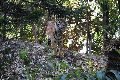 SD Wild Animal Park 2019-12-12