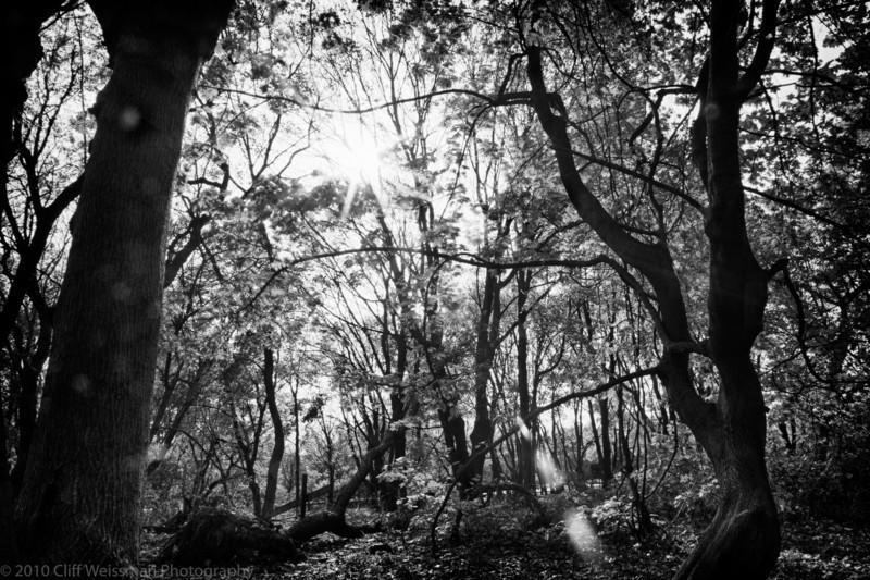 Trailside Park-7309_HDR.jpg