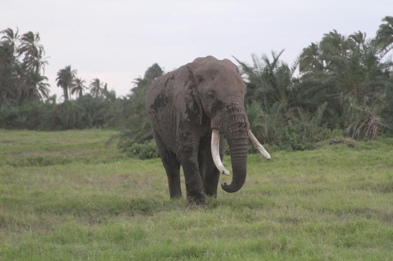Kenya 2019 #2 1488.JPG