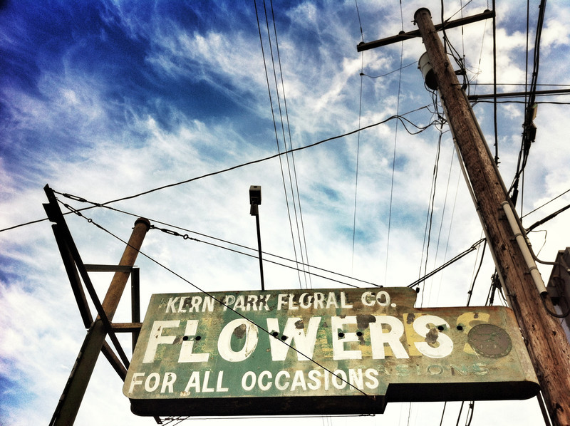 electric petals (iPhoneography)