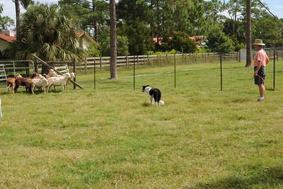 Herding Practice