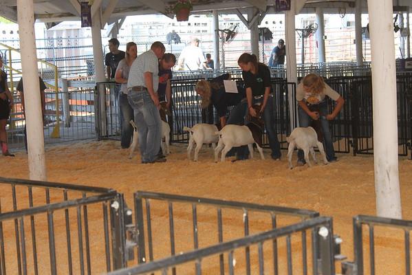 2015 Benton County Fair Goat and Sheep Shows
