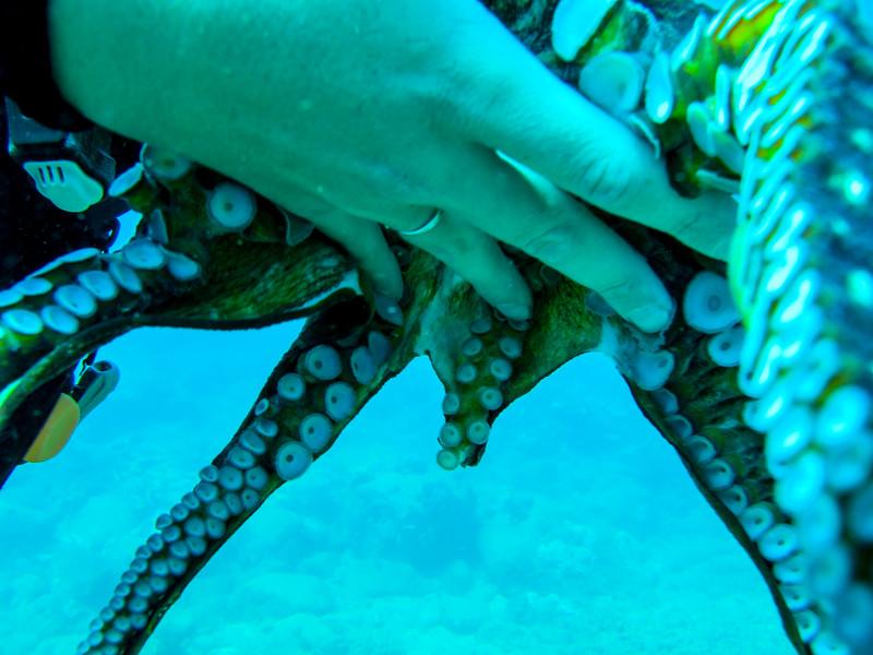 Hawaii diving - 134.jpg