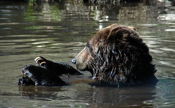 Bear7.jpg
