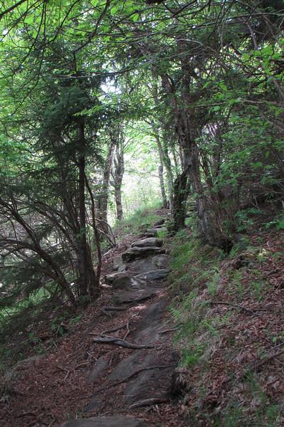Mountains-to-Sea Trail (5,820')