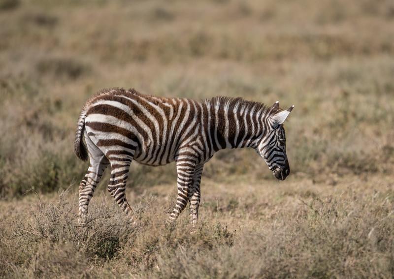 Tanzania_Feb_2018-405.jpg
