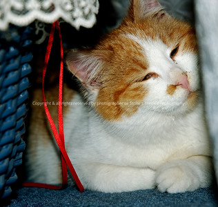 023-cat-warren_co-20feb09-5261