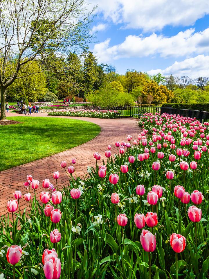 宾州长木公园,迎面的郁金香
