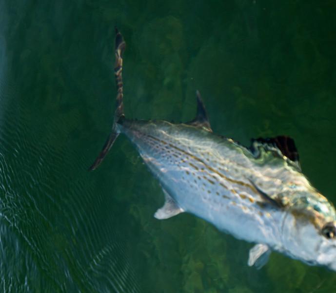 florida bay fishing-60