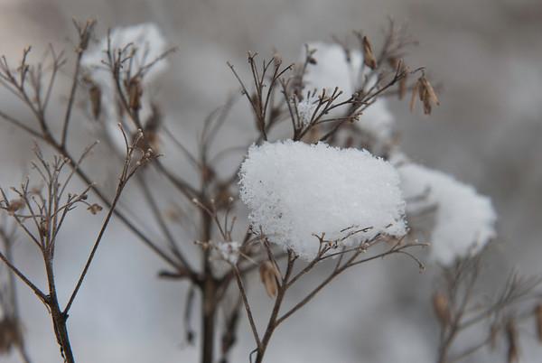 Upstate NY Winter Show